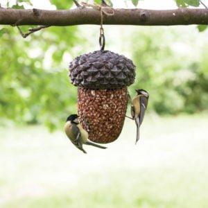 karmnik żołądź z ptakami