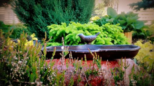 poidełko dla ptaków do ogrodu
