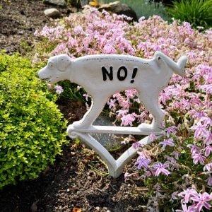 zakaz psów znak
