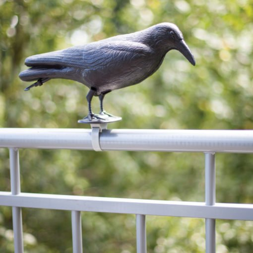 wrona na balkonie