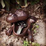 żeliwna żaba na klucz