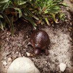 żółw żeliwny ozdoba do ogrodu